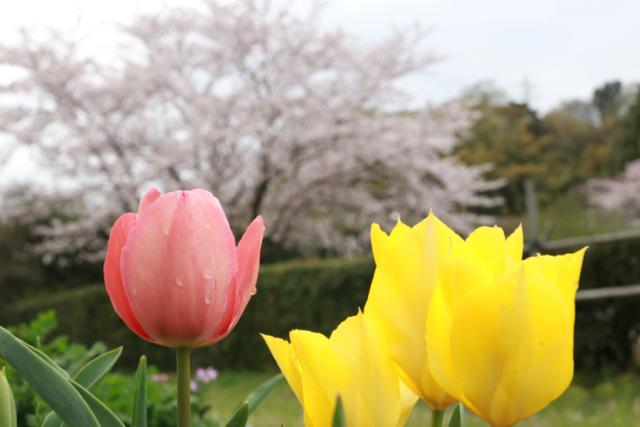 【横溝屋敷】_f0348831_07592243.jpg