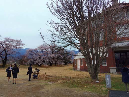 芸術村の桜_d0127634_11263716.jpg