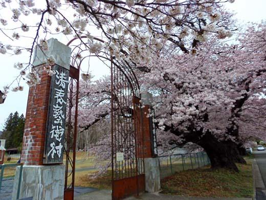 芸術村の桜_d0127634_11265605.jpg