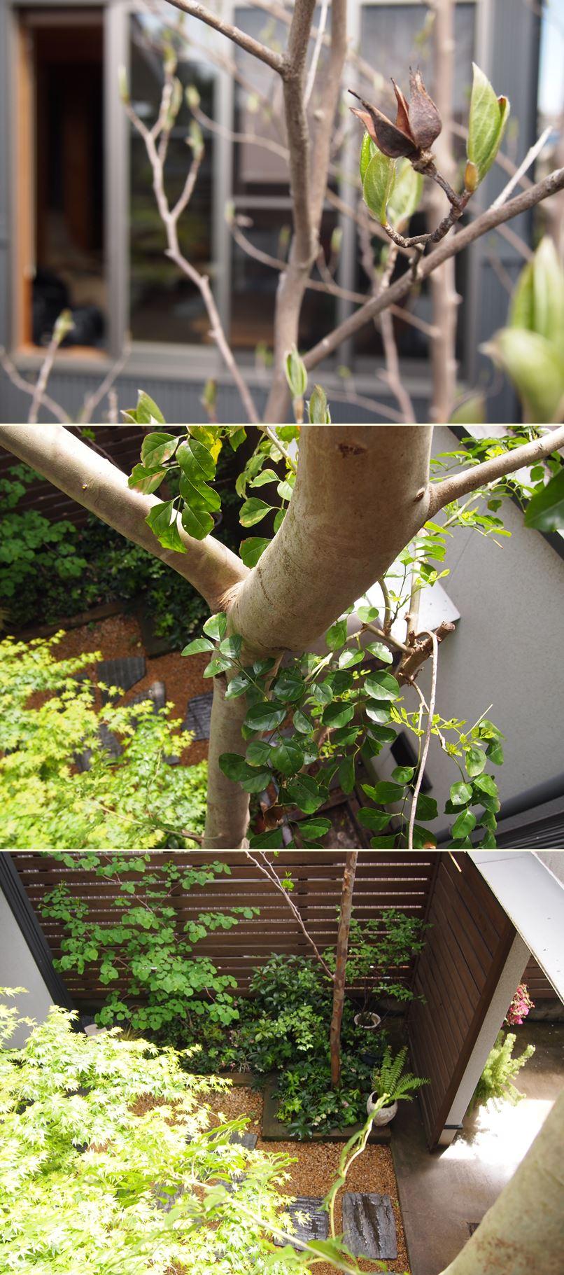 春爛漫☆_c0152341_110122.jpg