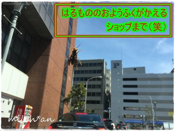 b0115642_1927610.jpg