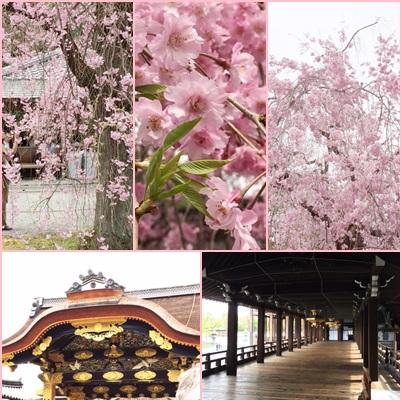 京都 花見 ✿_a0212046_11364626.jpg