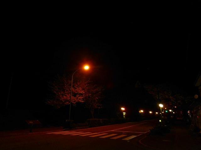 自宅前で夜 桜_c0327752_09045764.jpg