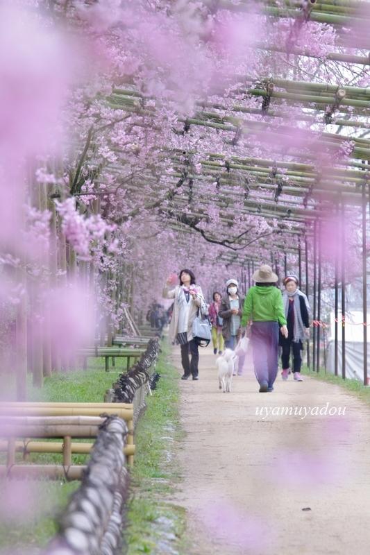 朝・・・半木の道_a0157263_23581205.jpg