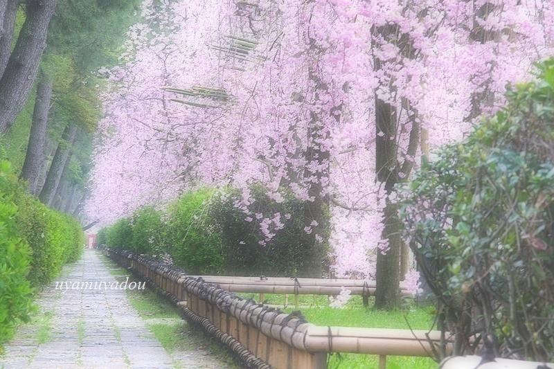 朝・・・半木の道_a0157263_23581274.jpg