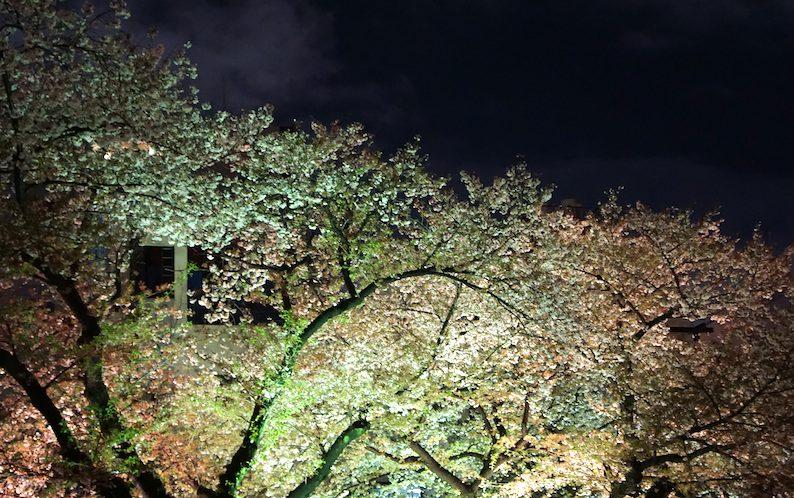 夜桜とブルース_b0057679_981097.jpg