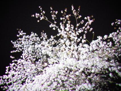 桜も終わり…_f0108001_18280325.jpg