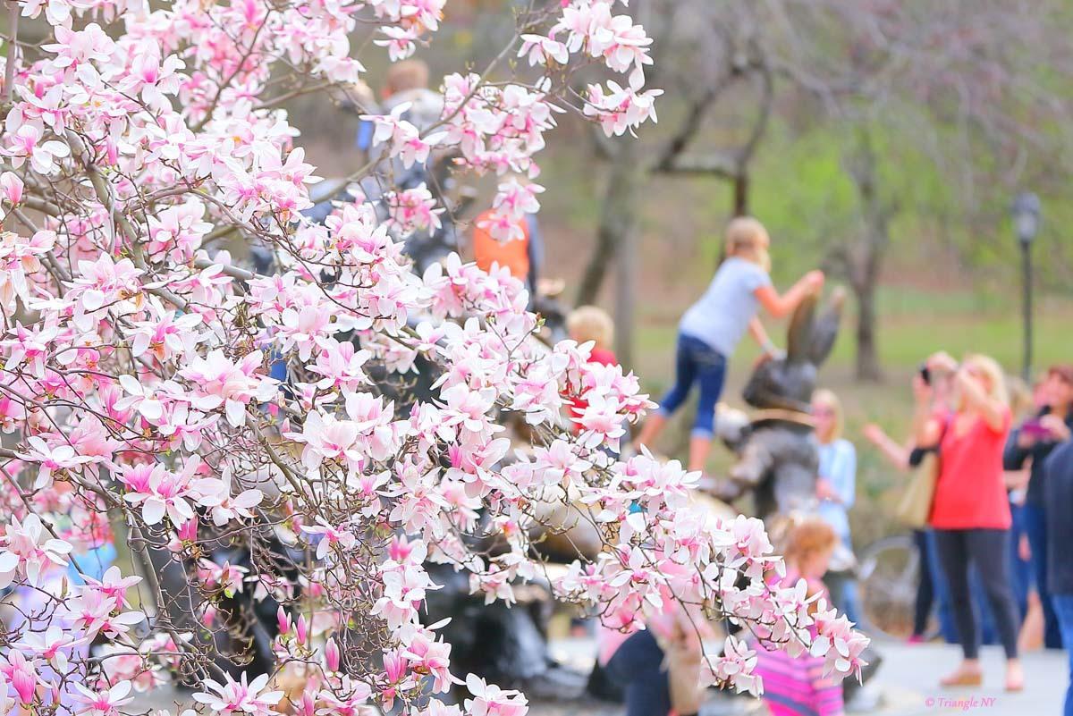 春を撮るお母さん_a0274805_10535430.jpg