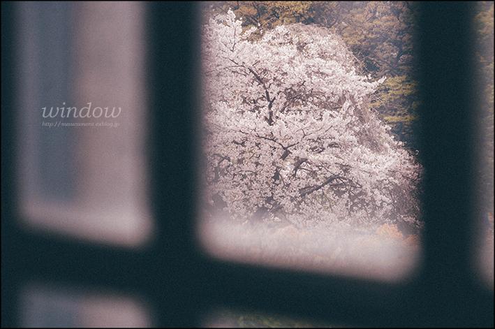 桜がみえる窓_f0100215_00325014.jpg