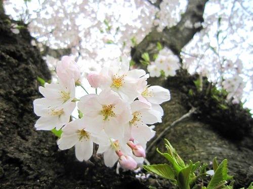 花、いろいろ。_b0157216_1523158.jpg
