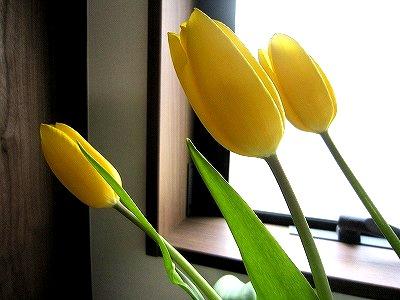 花、いろいろ。_b0157216_15322535.jpg