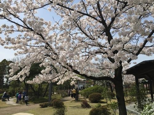 桜満開☆わくハン、無事終了!_a0126418_20292295.jpg