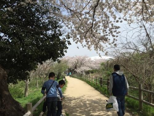 桜満開☆わくハン、無事終了!_a0126418_20295135.jpg