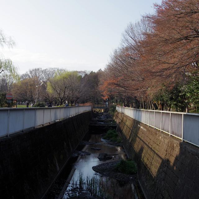 神田川-(源流)_b0058021_8105863.jpg