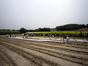 トウモロコシの種まき_d0120421_17334560.jpg