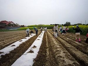 トウモロコシの種まき_d0120421_17335857.jpg