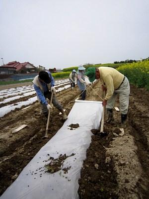 トウモロコシの種まき_d0120421_17355547.jpg