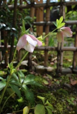 花だより 庭より_a0279848_1144557.jpg