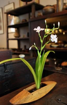 花だより 杼に生けたシャガ_a0279848_1232128.jpg