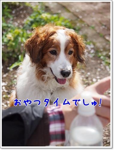 d0013149_00283102.jpg