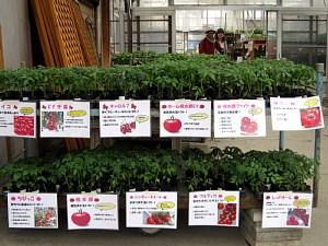 トマト苗様々な品種あります!_c0141652_16592621.jpg