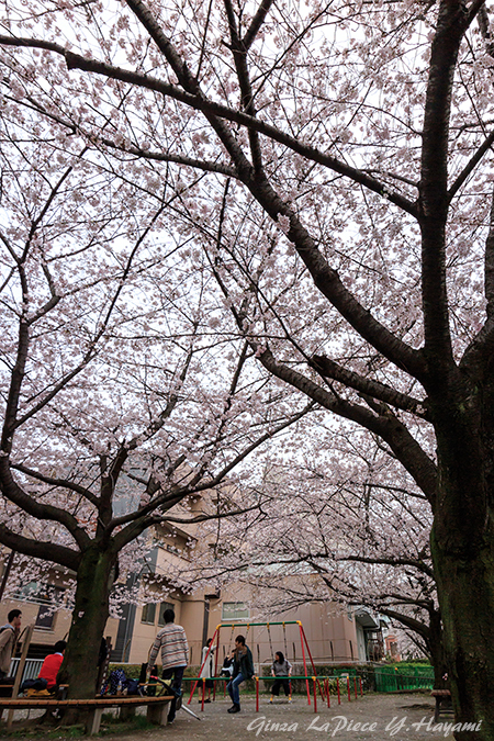 花のある風景 人とソメイヨシノの風景_b0133053_0101796.jpg