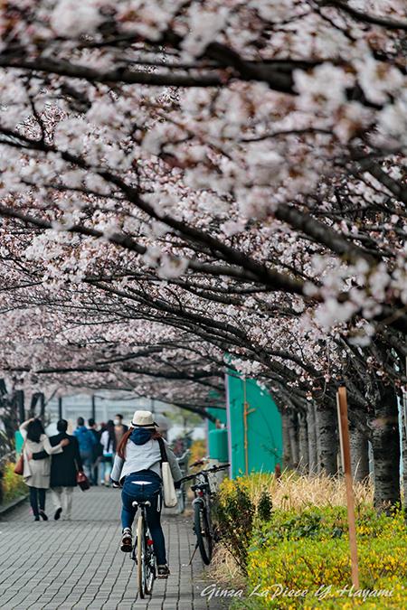 花のある風景 人とソメイヨシノの風景_b0133053_014462.jpg