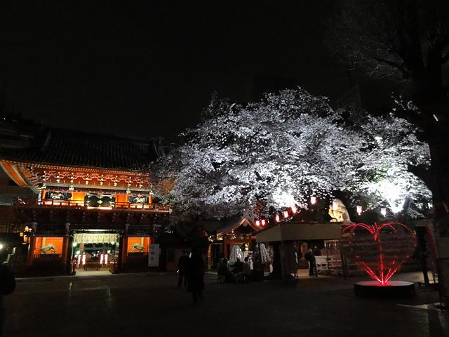 神田明神の桜 (2016/3/31、4/6)_b0006870_18221747.jpg