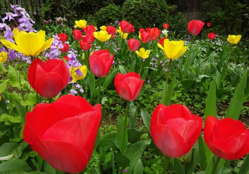 花の季節_f0059673_19185288.jpg