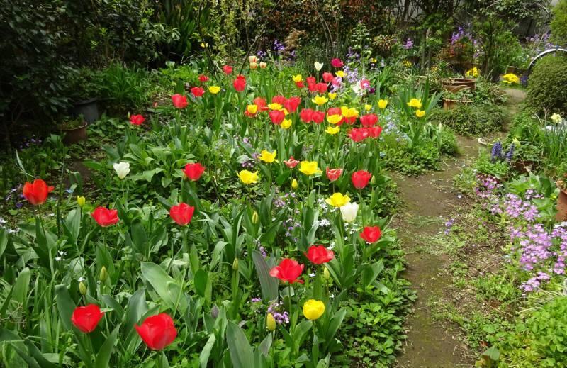 花の季節_f0059673_19194282.jpg