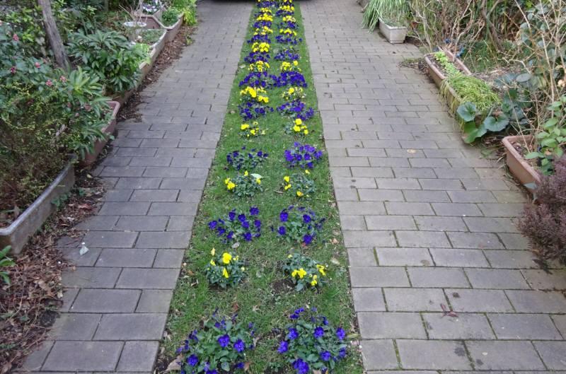 花の季節_f0059673_19202893.jpg