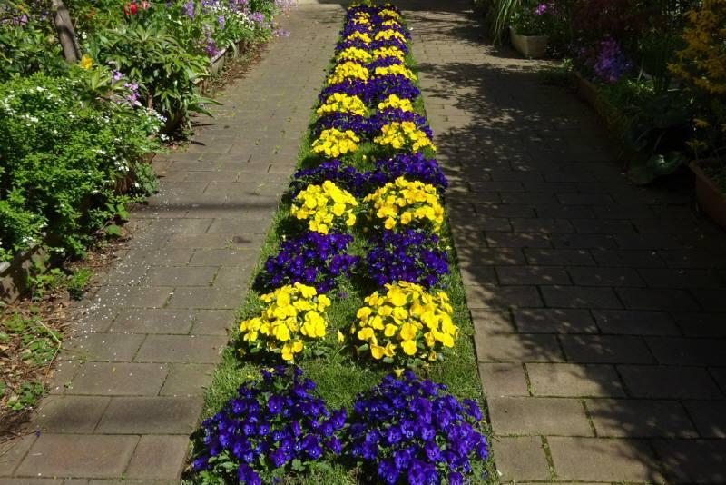 花の季節_f0059673_19205273.jpg