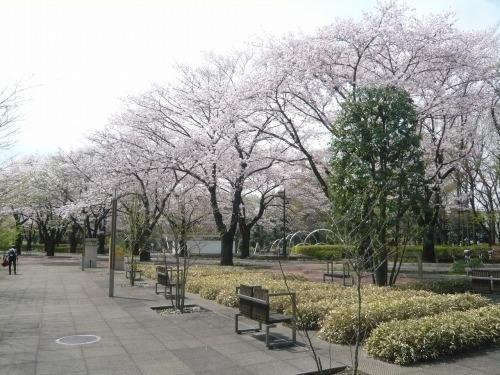 ポタリング 「桜」花見・東郷寺Ⅱ_a0262093_16440416.jpg