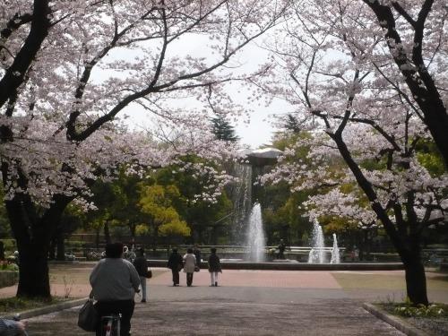 ポタリング 「桜」花見・東郷寺Ⅱ_a0262093_16512569.jpg