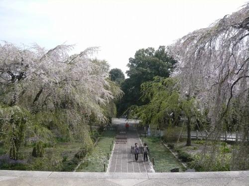 ポタリング 「桜」花見・東郷寺Ⅱ_a0262093_17343981.jpg