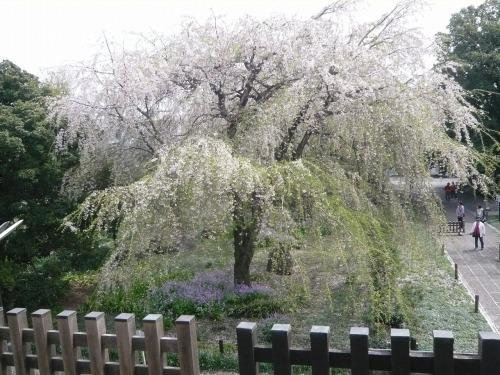 ポタリング 「桜」花見・東郷寺Ⅱ_a0262093_17360307.jpg