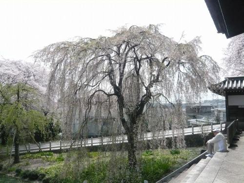 ポタリング 「桜」花見・東郷寺Ⅱ_a0262093_17363790.jpg