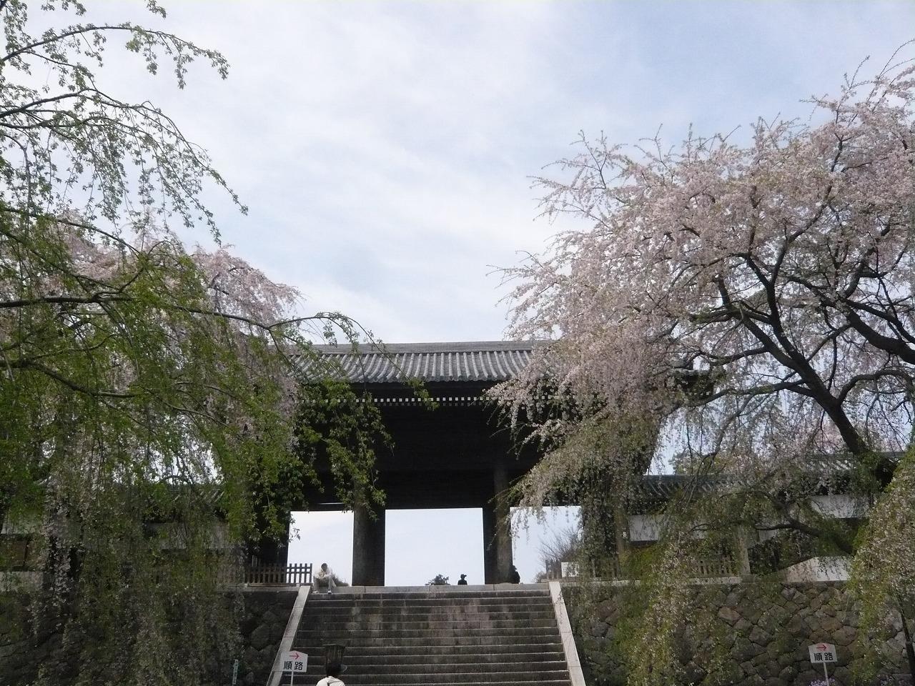 ポタリング 「桜」花見・東郷寺Ⅱ_a0262093_17370952.jpg