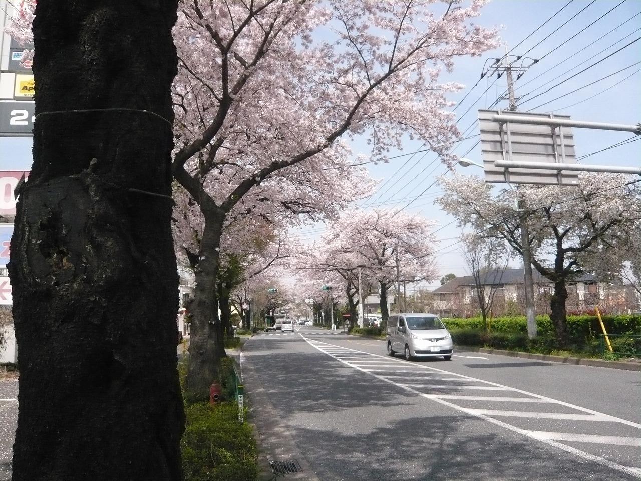ポタリング 「桜」花見・東郷寺Ⅱ_a0262093_17451736.jpg