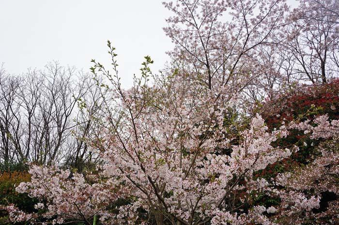 朝の散歩で、、_e0016894_20203659.jpg