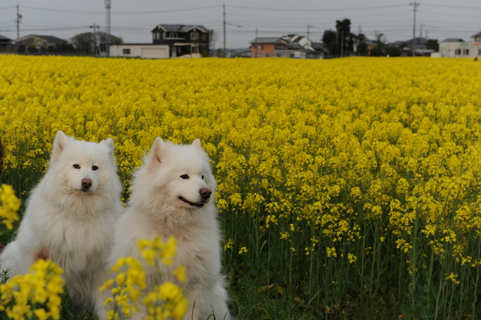 お花見~♪_a0049296_1945415.jpg