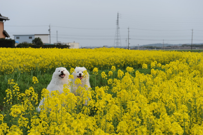 お花見~♪_a0049296_1946414.jpg