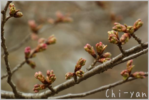 山桜の散るまで_e0219011_10165279.jpg