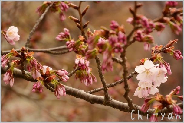 山桜の散るまで_e0219011_10173410.jpg