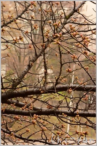 山桜の散るまで_e0219011_1017845.jpg