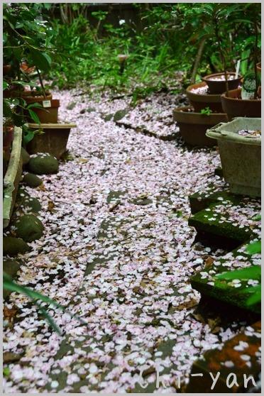 山桜の散るまで_e0219011_10203784.jpg