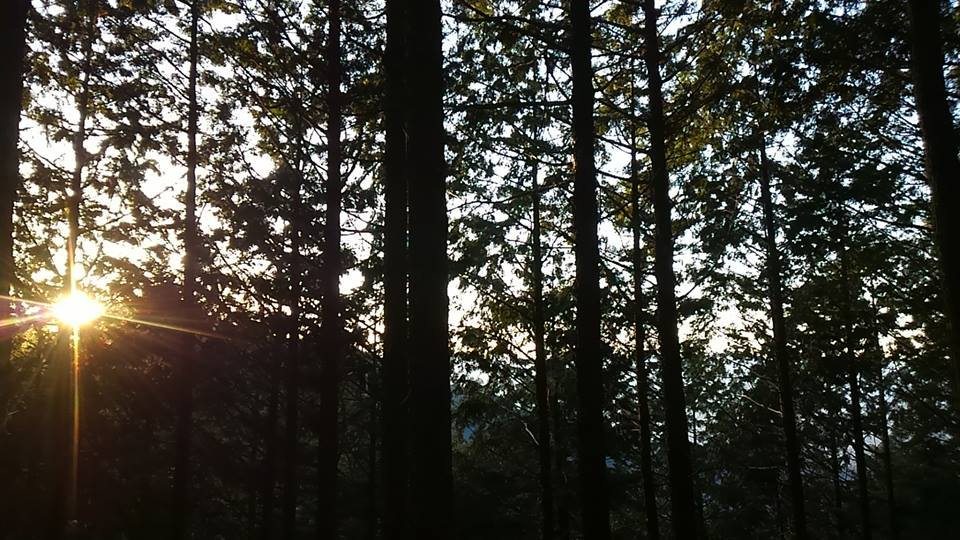 ▲山守コースを歩く(吉野やままち×月一山へ番外編)_a0355629_22414468.jpg