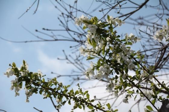めくるめく春_b0132338_11163899.jpg