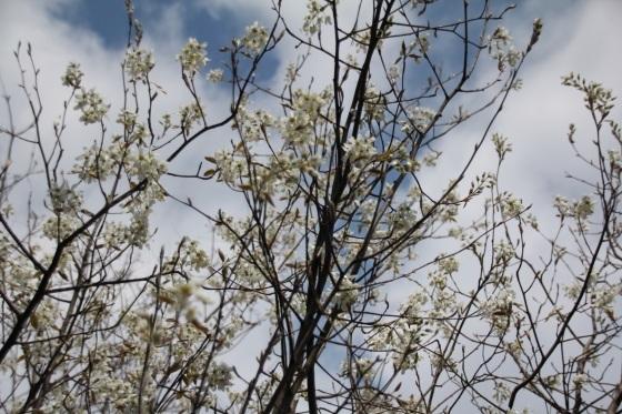 めくるめく春_b0132338_11165142.jpg