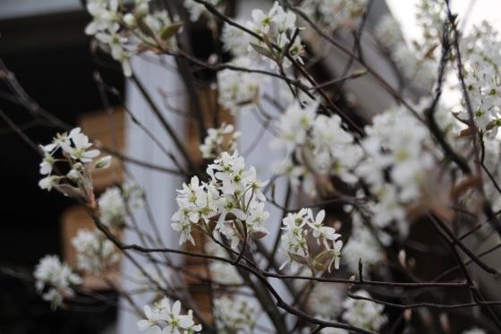 めくるめく春_b0132338_11174014.jpg